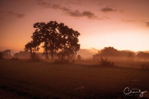 Hazy Morn © Imagery by Charly™ | All Rights Reserved
