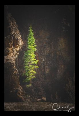 Lonely Pine Tree © Imagery by Charly™ | All Rights Reserved