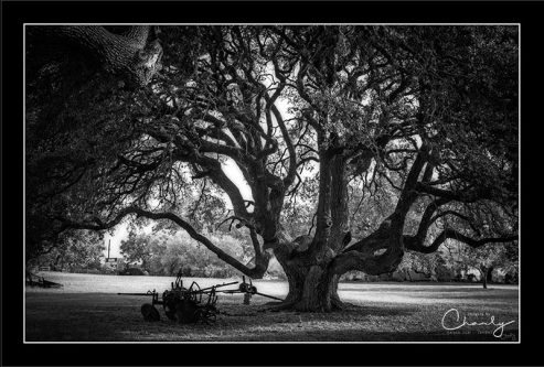 Gnarly Tree with Plow © Imagery by Charly™   All Rights Reserved